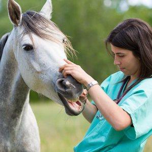 soins-veterinaire-dents-cheval.jpg