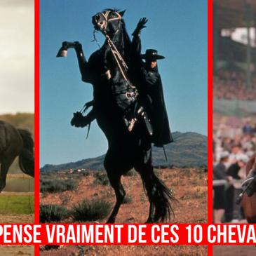 Les chevaux de films, version honnête